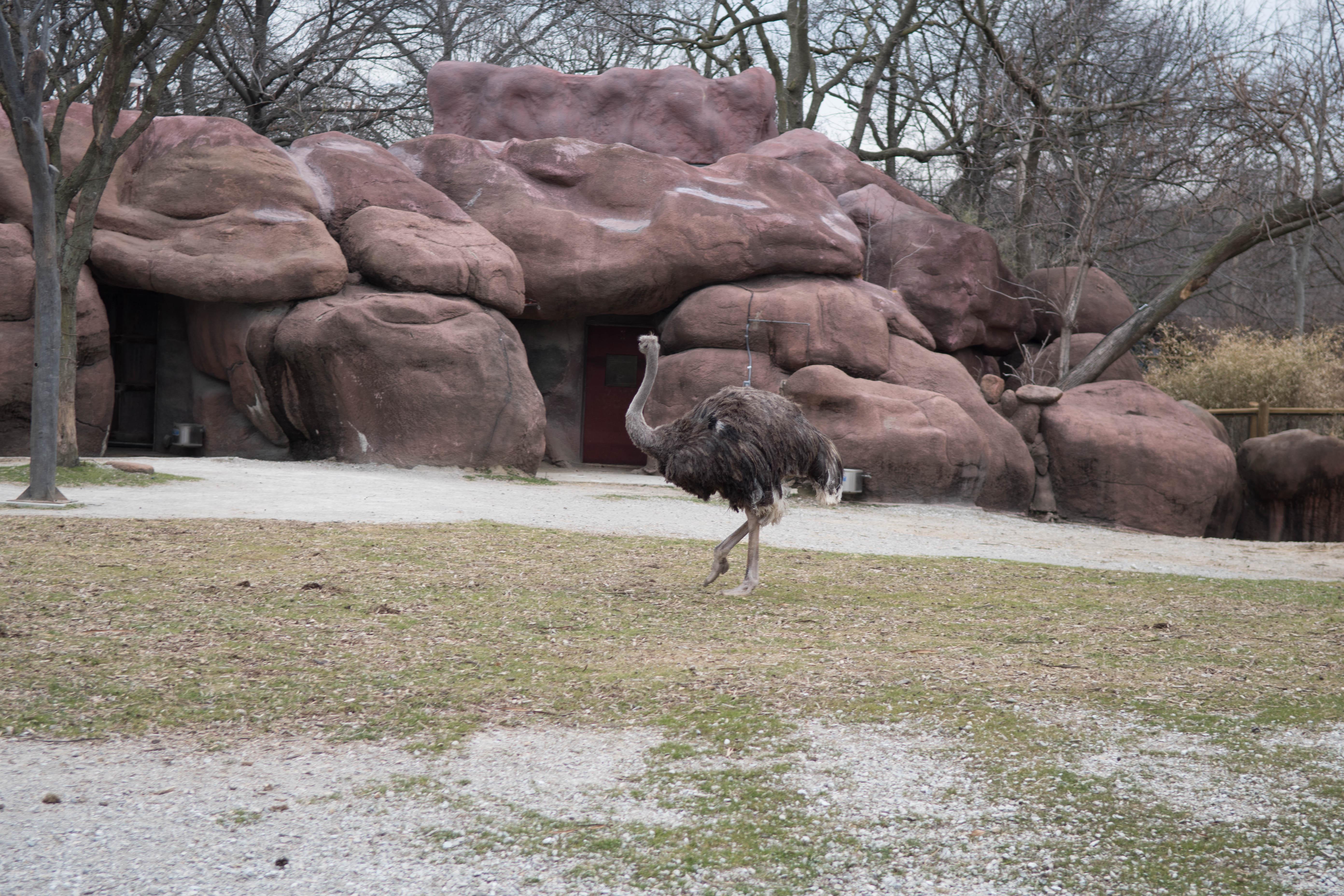 jim west central zoo collierville tn