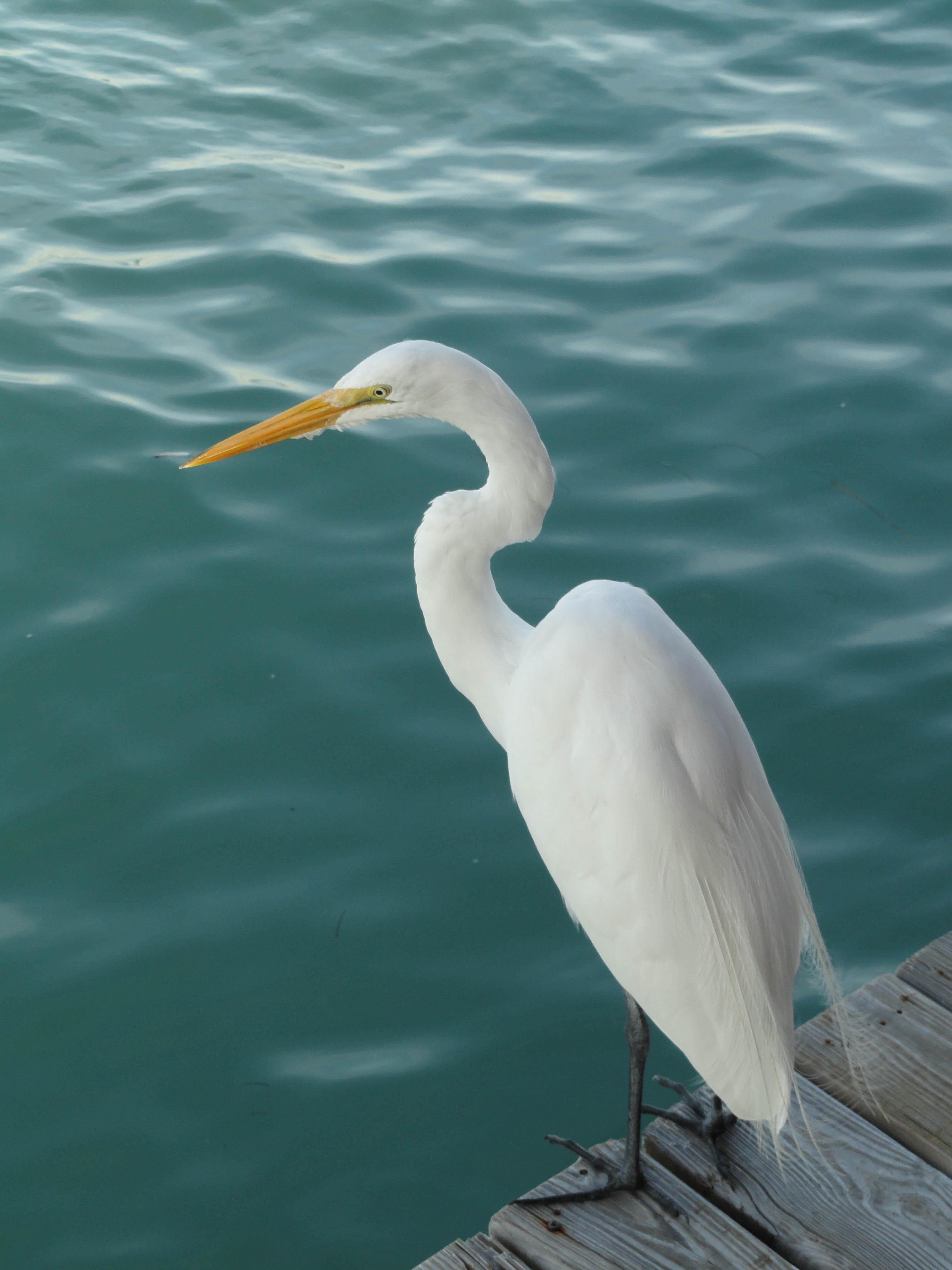 jim-west-collierville-tn-central-florida-wildlife-photo