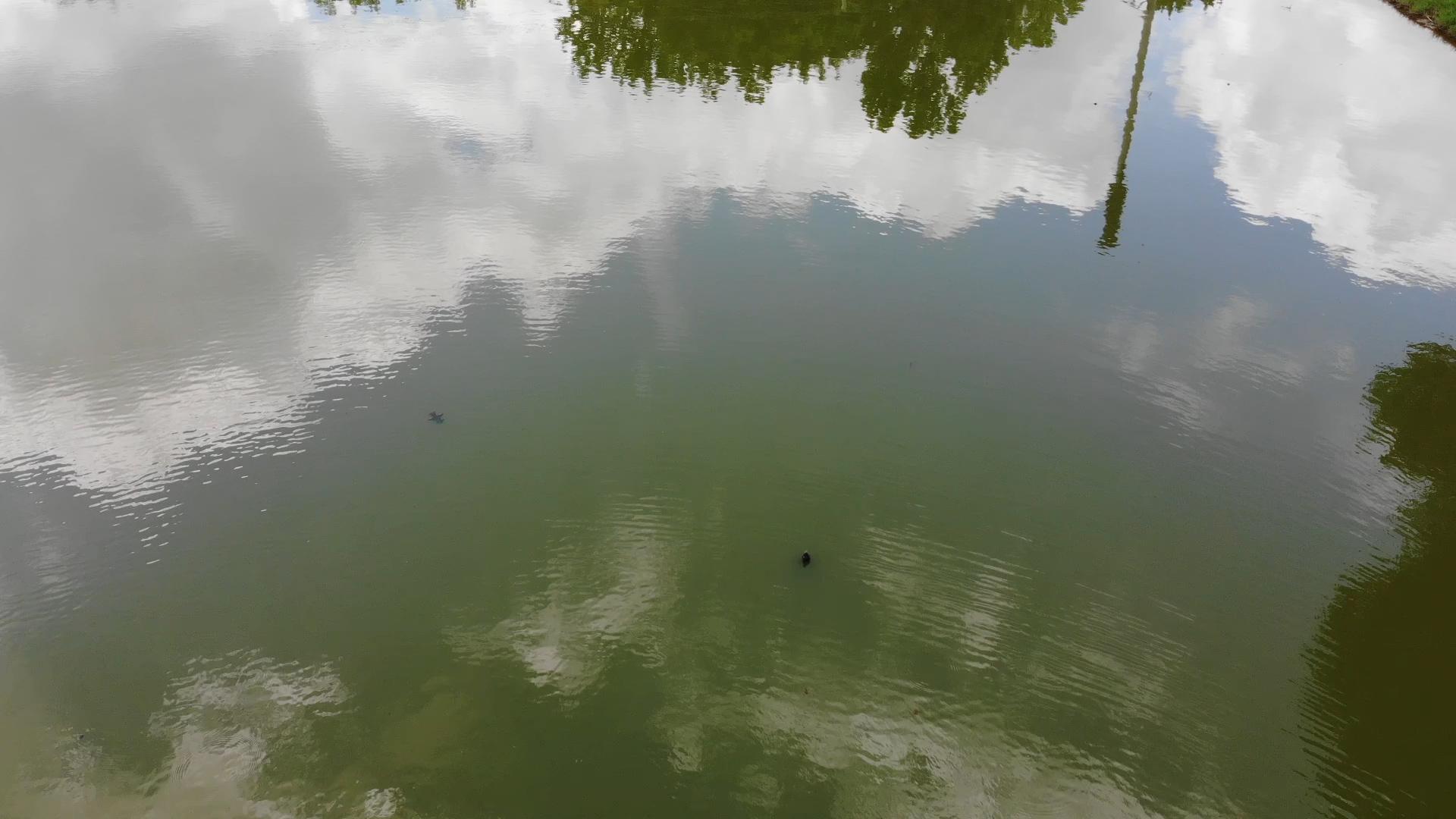 jim west collierville tn wildlife-turtles