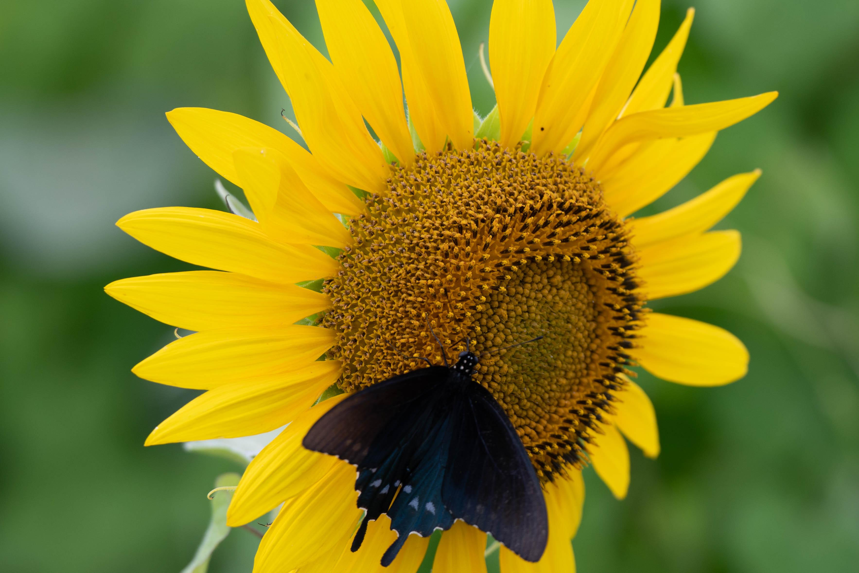 jim-west-collierville-tn-wildlife-nature-6