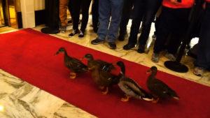 jim-west-memphis-tn-peabody-ducks